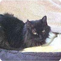 Adopt A Pet :: Sabrina - Quincy, MA