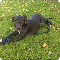 Adopt A Pet :: Jake - Inglewood, CA