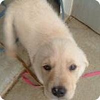Adopt A Pet :: Jessie - New Boston, NH