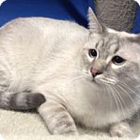 Adopt A Pet :: Ellie - Colorado Springs, CO