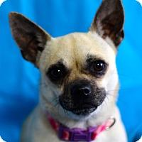 Adopt A Pet :: Sally - Kempner, TX