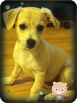 Terrier (Unknown Type, Small) Mix Puppy for adoption in Irvine, California - NEMO