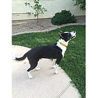 Adopt A Pet :: Willie - Tempe, AZ