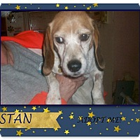 Adopt A Pet :: STAN - Ventnor City, NJ