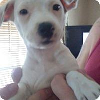 Adopt A Pet :: Maddie - Thousand Oaks, CA