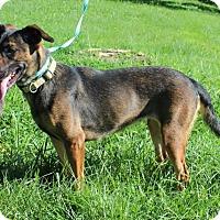 Adopt A Pet :: K.C. - Columbia, TN