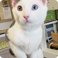 Adopt A Pet :: Spot - Chesapeake, VA