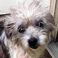 Adopt A Pet :: Dottee - Alpharetta, GA