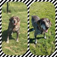 Adopt A Pet :: Tank - Carroll, IA