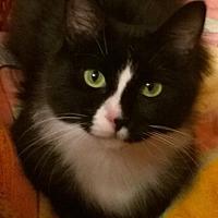 Adopt A Pet :: Oriel - LJ - Burlington, WA