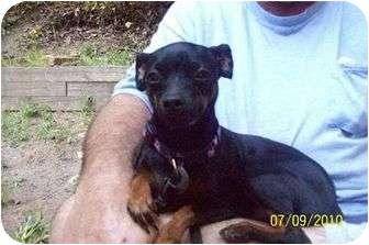 Miniature Pinscher Mix Dog for adoption in Croton, New York - Kera