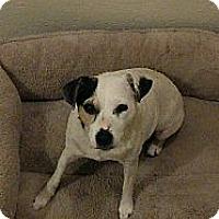 Adopt A Pet :: Khloe - Oklahoma City, OK