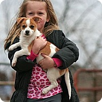 Adopt A Pet :: Armes - Spring City, PA