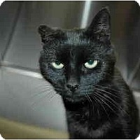 Adopt A Pet :: Mystic - Greenville, SC