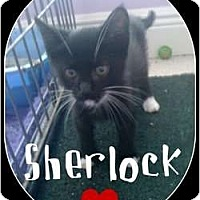 Adopt A Pet :: Sherlock - Mobile, AL