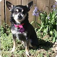 Adopt A Pet :: Polly - Nashville, TN