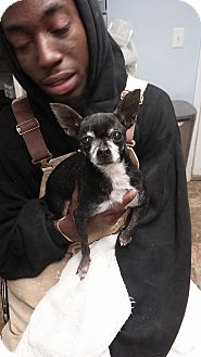 Chihuahua Mix Dog for adoption in Darlington, South Carolina - Baby