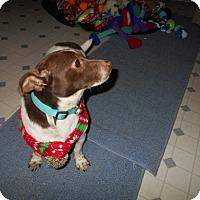 Adopt A Pet :: Brownie -Adopted! - Kannapolis, NC