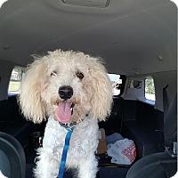 Adopt A Pet :: Chuckie - Kingwood, TX