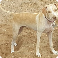 Adopt A Pet :: Addie - Las Cruces, NM