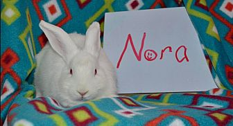 American for adoption in Erie, Pennsylvania - Nora