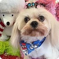 Adopt A Pet :: Rocket - Millersville, MD