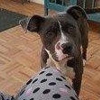 Adopt A Pet :: ELLE - Hampton, VA