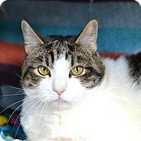 Adopt A Pet :: Casey - Hyde Park, NY