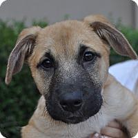 Adopt A Pet :: Kenna - Atlanta, GA