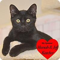 Adopt A Pet :: Jet Set - San Leon, TX