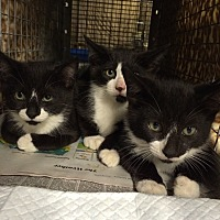 Adopt A Pet :: Minnie, Mickey, Marshall - Staten Island, NY