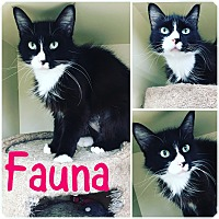 Adopt A Pet :: Fauna - St Clair Shores, MI