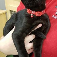 Adopt A Pet :: Topher - St. Louis, MO