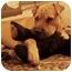 Photo 2 - Shar Pei Dog for adoption in Houston, Texas - Ming Lei