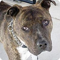 Adopt A Pet :: Hydro - YERINGTON, NV
