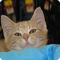 Adopt A Pet :: Oliver - Port Republic, MD