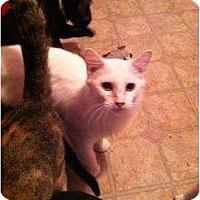 Adopt A Pet :: Snowball - Mobile, AL