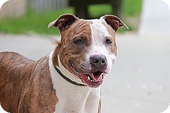 Terrier (Unknown Type, Medium) Mix Dog for adoption in Brookhaven, New York - Jalapeno
