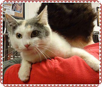 Calico Cat for adoption in Marietta, Georgia - TWINKLE (R)