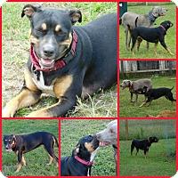 Adopt A Pet :: Star - Inverness, FL