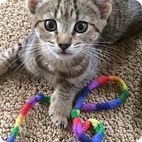 Adopt A Pet :: Lila 3 - Plainville, MA