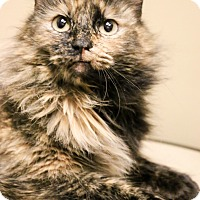 Adopt A Pet :: Theresa - Chicago, IL