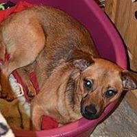Adopt A Pet :: Crissy - Ozone Park, NY