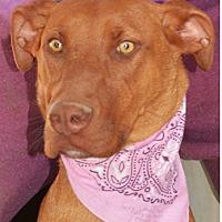 Doberman Pinscher Mix Dog for adoption in Littlerock, California - Faith