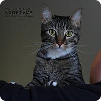 Adopt A Pet :: Kane - Edwardsville, IL