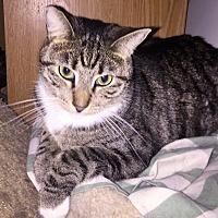 Adopt A Pet :: Missy - Monrovia, CA