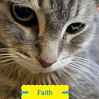 Adopt A Pet :: Faith - Hamilton, ON