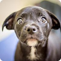 Adopt A Pet :: Lila - St. Petersburg, FL