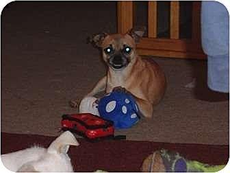 Pug Mix Dog for adoption in San Antonio, Texas - Georgie Girl