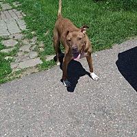 Adopt A Pet :: Marcella - Sioux Falls, SD